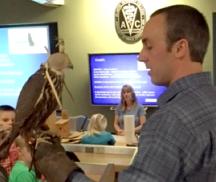 TV falcon photo